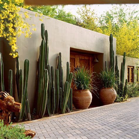 mexican fencepost cactus growth rate  trend home