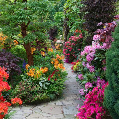 footpath flowers path through the azalea and rhododendron flowers four seasons garden flickr