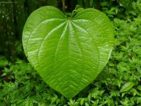 lovely2best plant leaf pic