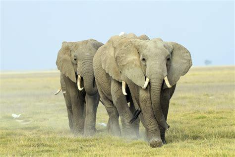 Was Ist Ein 5424 by Kenia Sondertour Zur Tierwanderung In Der Maasai Mara