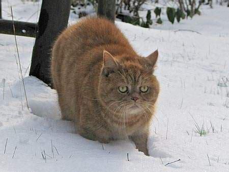fkk im eigenen garten katzen vom nachbarn im garten best 28 images fkk im