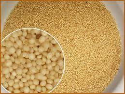como cocinar el amaranto en grano beneficios para la salud de las semillas y hojas de