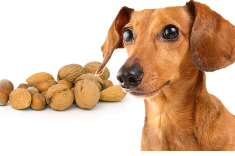 can dogs salt can dogs eat nuts food selector