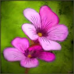 gallery simple still life flower paintings