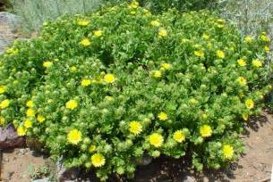 Drought tolerant plants for a san jose area native garden