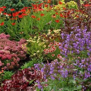 www simplyseedsandplants co uk
