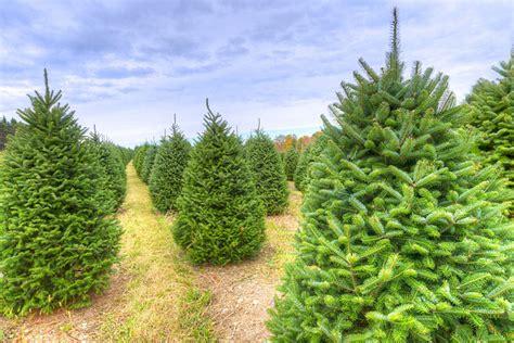 best christmas tree farms in washington state tree farms regional directory