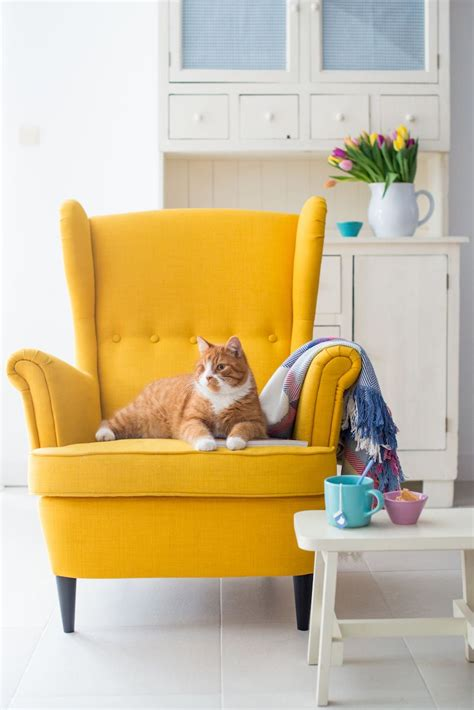 yellow living room chair chair and colour idea punchy colour throughout the salon