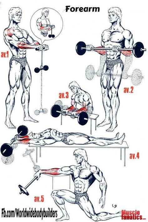 best 20 forearm workout ideas on bodybuilding