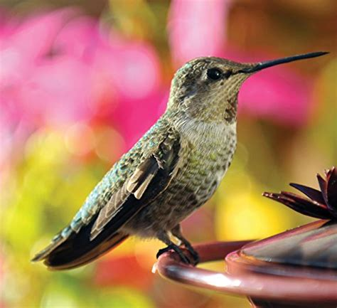 audubon park hummingbird food rating audubon park 1661 hummingbird food nectar powder 9 ounce lawn patio in the uae see prices