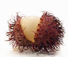 Sea Urchin Decor Indonesian Fruit Rambutan Daily Two Cents