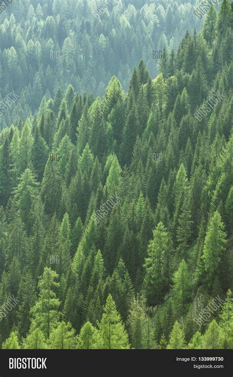 fir green stock photo 169 fritzundkatze 4164584 imagen y foto healthy green trees forest old bigstock