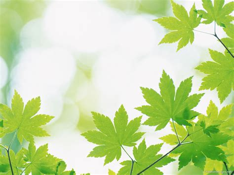 powerpoint themes plants leaves powerpoint background powerpoint backgrounds