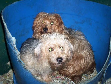 puppy farms puppy farms how and why to avoid buying a farmed puppy pets4homes