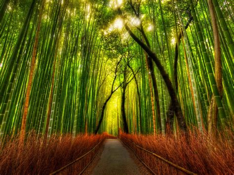 Background Hutan | wallpapers bamboo forest wallpapers
