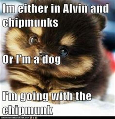 Chipmunk Meme - 1000 images about memes on pinterest chipmunks