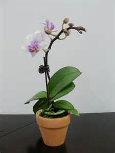 orchid flask seeds t c plant orchid orchid plant house