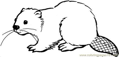 beaver drawings printable coloring page beaver 16