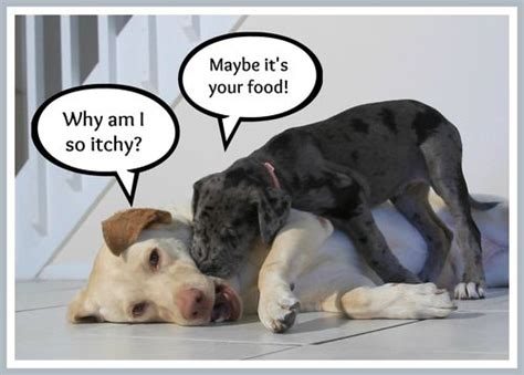 am i allergic to dogs how to identify sneaky food allergies in pets guest