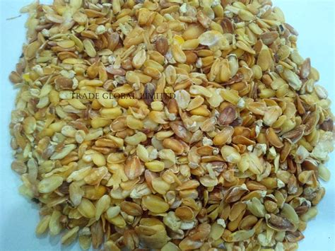 products corn germ maize germ for oil manufacturer in