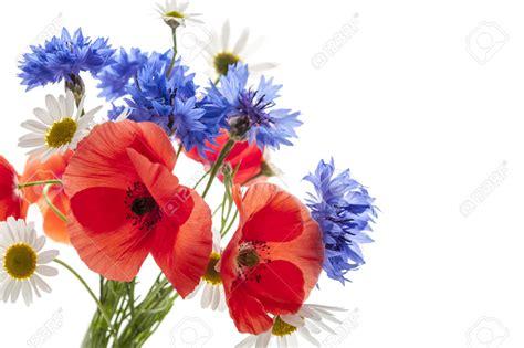 immagini di fiori margherite bouquet di fiori di co papaveri margherite