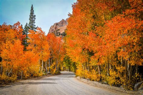 what are fall colors bishop bursting with fall colors a peek of them at