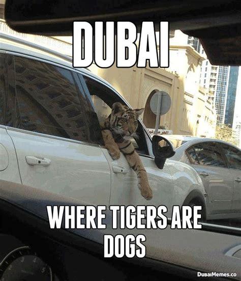 Dubai Memes - dubai where tigers are dogs dubai meme tigers pinterest