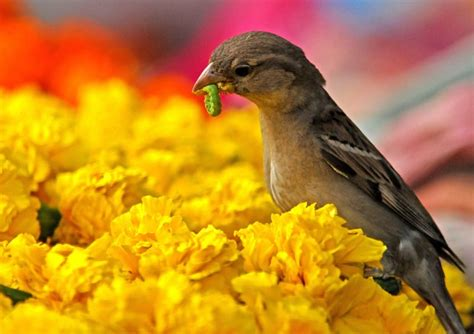 alimenti ai figli compagna infedele il passero d 224 meno alimenti ai figli