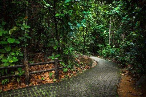 bukit batok nature park  guide   enticing holiday