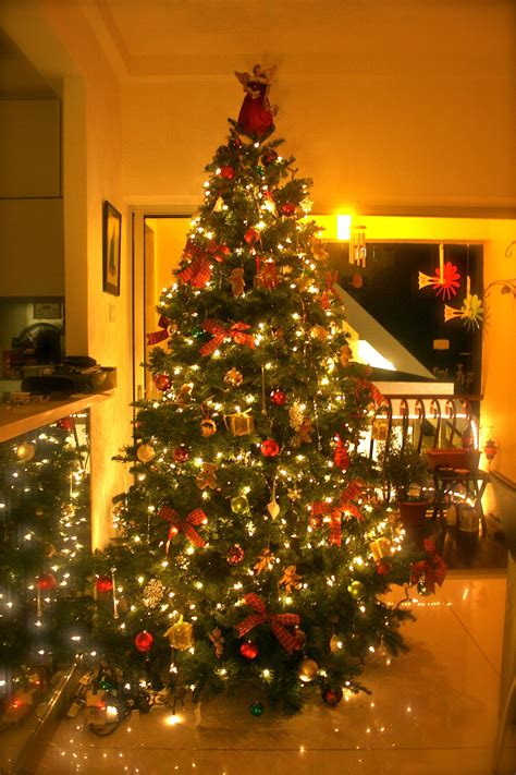christmas tree penny hanley howley insurance blog