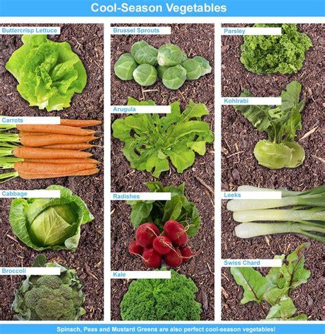 17 Best Images About Garden Center On Pinterest Gardens Early Garden Vegetables