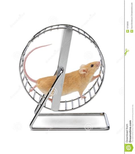 Wheels Exercise X8 Kincir Hamster Mencit mouse hamster exercise wheel stock photo image of activity mouse 13758830