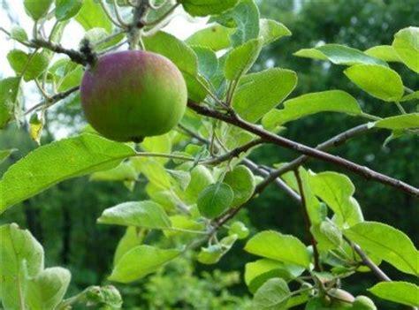 cross pollination fruit trees cross pollination fruit trees as metaphor arts