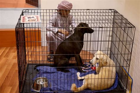 why do muslims dogs muslims keeping dogs as pets