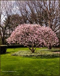 michael j lee photography llc magnolia tree