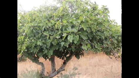 le vogelkäfig le figuier fig beaut 233 et perfection