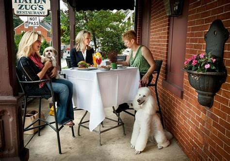 Pooch Patio by Pooch Patio Enjoy Outdoor Dining With Your Picture