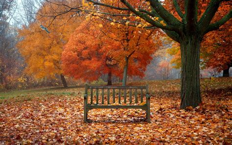 fall bench scenes of autumn desktop wallpaper