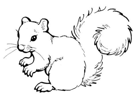 coloring page of a gray squirrel preschool printables of squirrel coloring pages free b3hca