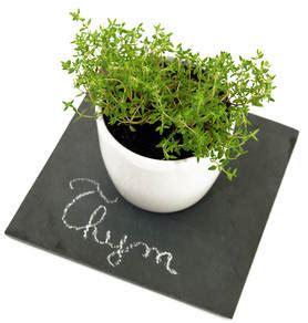 thym cuisine thym bienfaits et vertus pour la sant 233