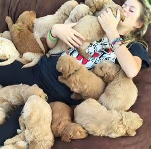 covered in puppies is covered in a pile of puppies as she snoozes