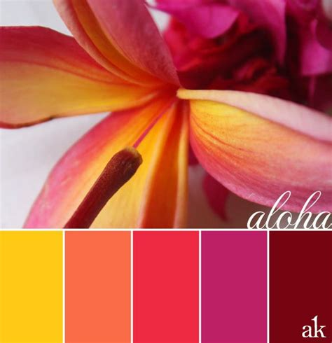 hawaii colors pink plumeria color palette hawaiian inspired katelyn s