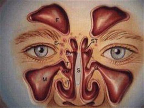 muco orecchio interno rinologia naso e seni paranasali orl team