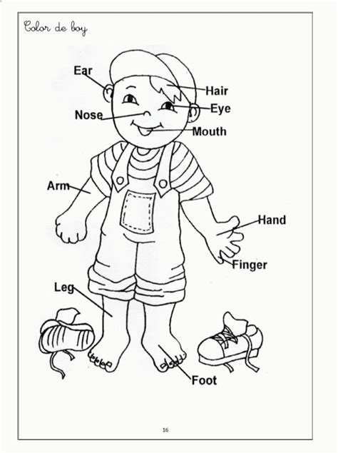 Body Coloring Pages For Toddlers | human body color pages coloring home