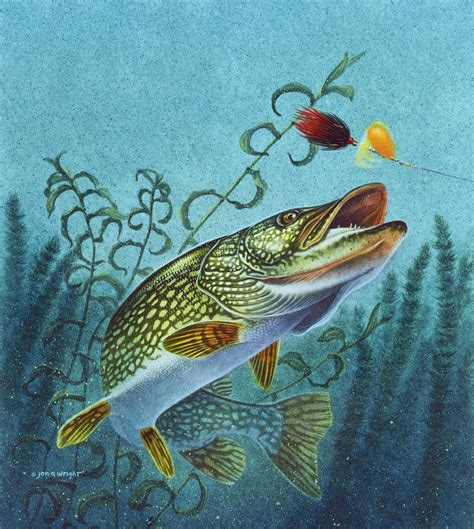 northern pike spinner bait painting by jon q wright