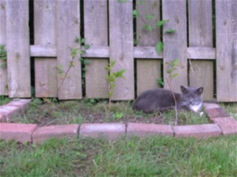 how to keep cats out of flower beds how to keep cats out of garden
