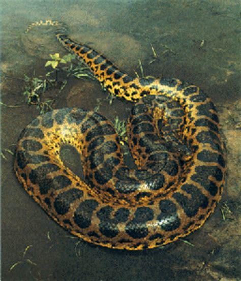 film anaconda yang main di kalimantan penakan ular raksasa di indonesia hoax kah