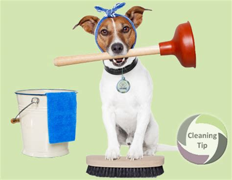 is a dogs clean how to clean up after dogs by trade