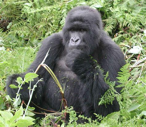 Uganda, Rwanda Tourism and Travel Info Guide, News: My ...