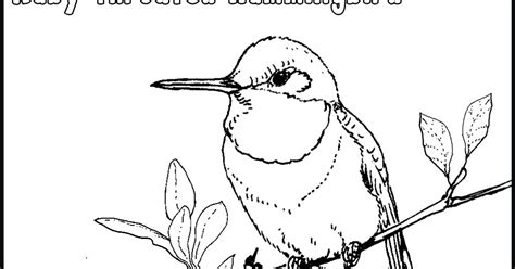 hummingbird coloring page coloring pages of hummingbirds best coloring pages